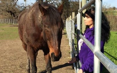 Equine Reiki: Peaceful Healing for You and Your Horse